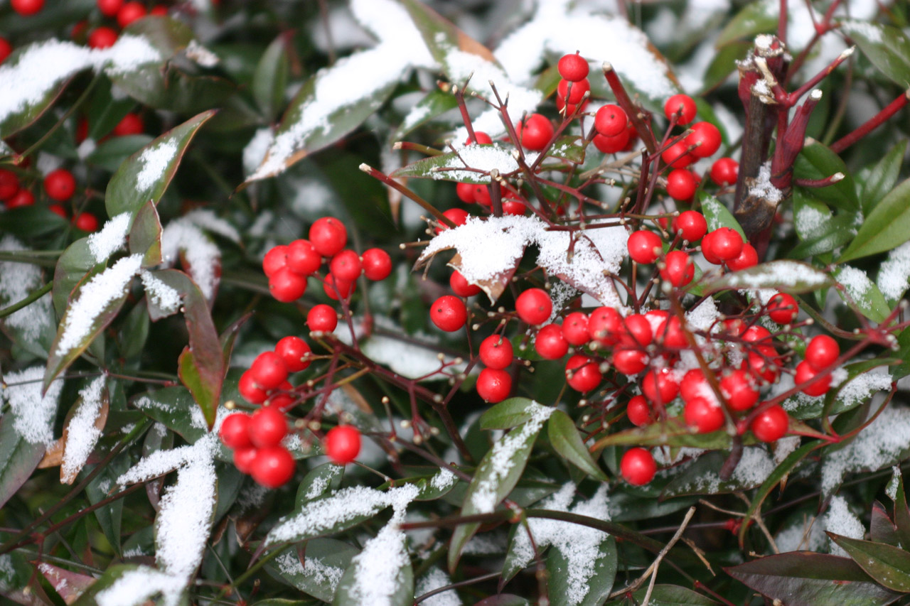 how to care for your garden in winter