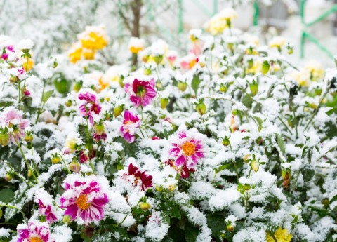 How to Care for Your Garden in Winter Picture